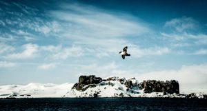 Antartida-FotoPlataformaDivCient-UCM-2